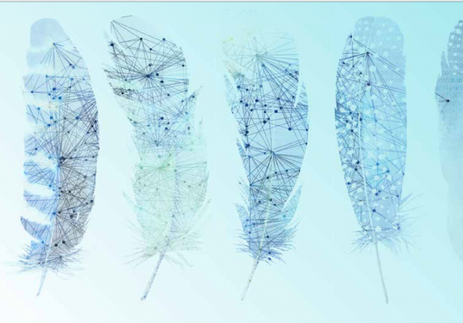 feathers with network connections in background